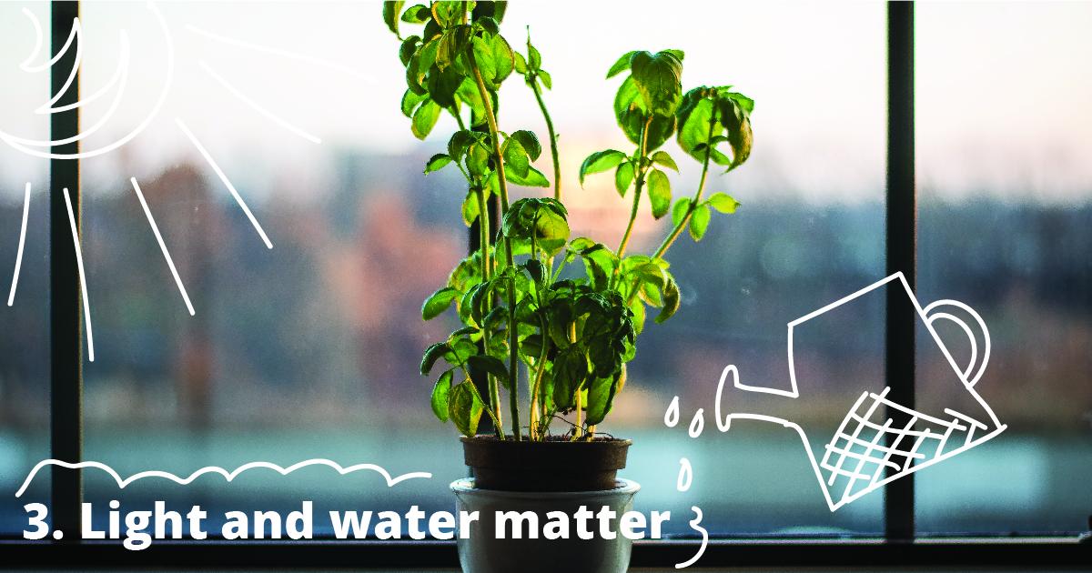 3. Light and water matter.
